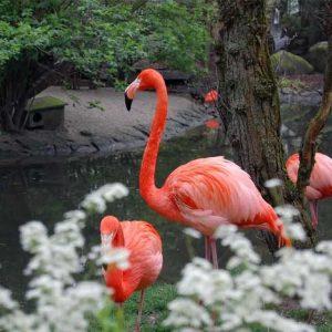 Keaneragaman Flora dan Fauna